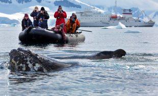 Un albaiulian vrea sa ajunga in Antarctica prin intermediul concursului Oceanwide Expeditions