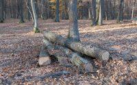 Fara autorizatie: Un barbat din Valea Lunga s-a apucat sa taie copaci din padure
