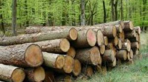 lemne_28032300