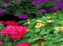 5 plante care te scapă de stres şi anxietate