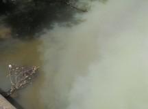 Radu Cristian: Oprește cineva poluarea de pe râul Sebeș?