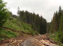 RECORD NEDORIT: Cea mai mare cantitate de lemn confiscată după 1989 în judeţul Alba