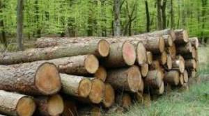 Aproape 40 mc material lemnos, confiscaţi de poliţiştii de pe Valea Sebeşului