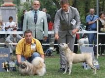 EVENIMENT CHINOLOGIC: Alba Iulia găzduiește în acest week-end Alba Carolina Cup 2013