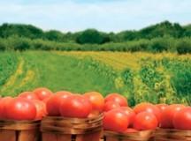 Depuneri de cereri de solicitare pentru ajutorul specific  pentru agricultura ecologică