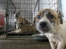 """RADU CRISTIAN:""""Există soluţii la problema câinilor fără stăpân din Sebeş"""""""