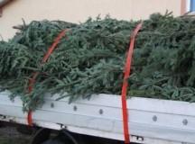 Pomi de Crăciun și 25 de metri cub de material lemnos confiscat în Apuseni