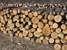 Muntii Apuseni: Mici taietori ilegali de lemn, prinsi de politisti