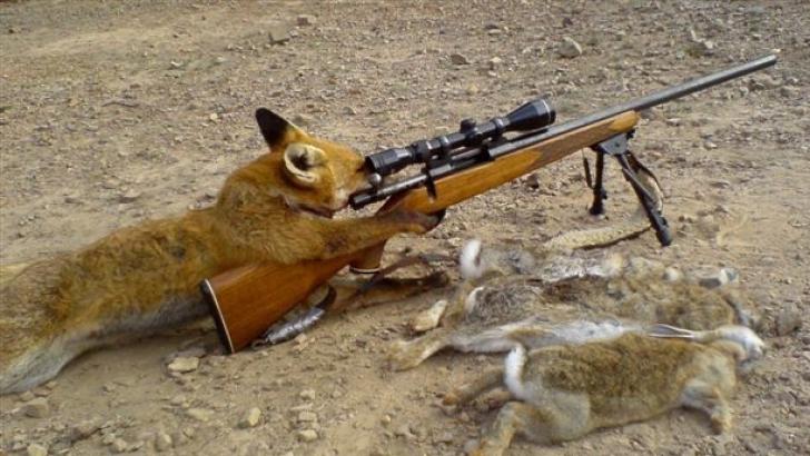 foxhunter_48642700