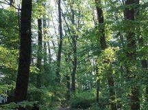 Activitatea Holzindustrie Schweighofer va fi atent monitorizata de Ministerul Apelor si Padurilor