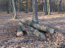 Un barbat din Rosia Montana prins cand taia ilegal copaci din padure