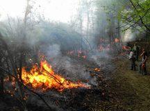 Padure distrusa de incendiu in comuna Vadu Motilor