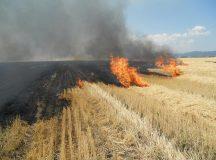 Patru incendii de vegetatie au fost stinse de ISU Alba in weekend