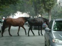 Caii nesupravegheati pot aduce aduce amenzi grele!