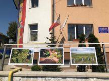 """""""Magia Toamnei"""" – cercetare și expoziție de fotografie etnografică despre viticultura din județul Alba"""