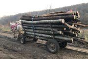 2,9 metri cubi de material lemnos confiscați de jandarmii aiudeni